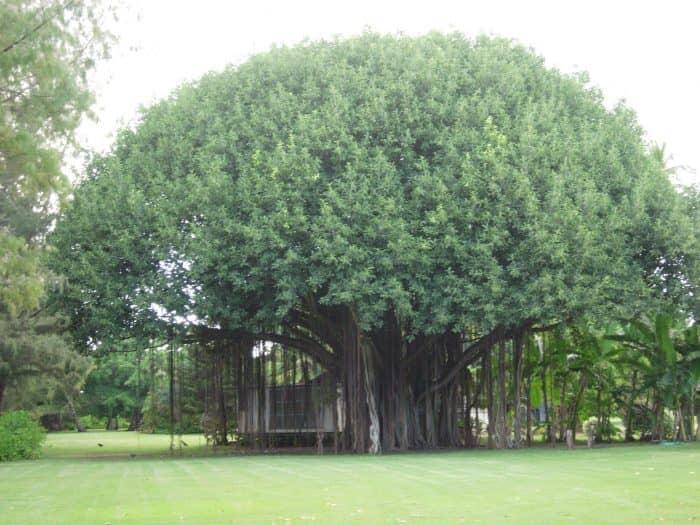 Фимайский исторический парк