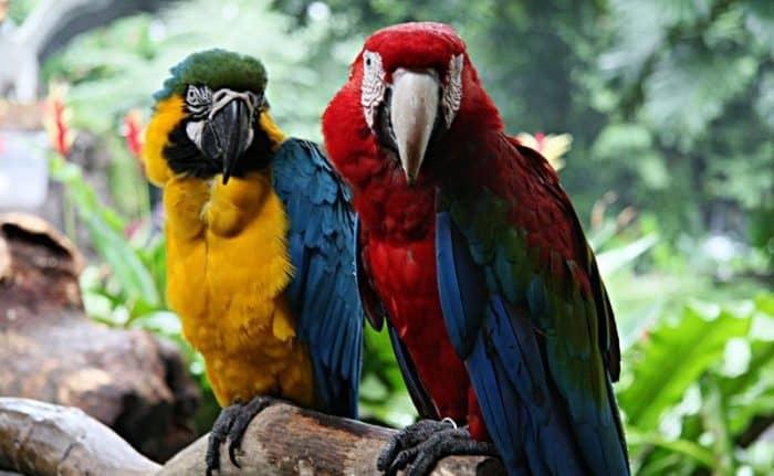 Птичий парк Джуронг