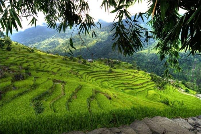 Растительность и дикая природа